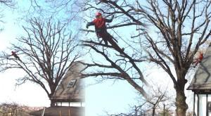 Gesamteinheitliche Baumpflege bei Bedf. inkl. Standortsanierung