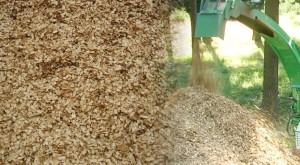 Häckseln von Schnittgut, Stammholzentsorgung